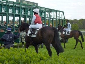 Jockey and Racehorse Move into the Starting Gate