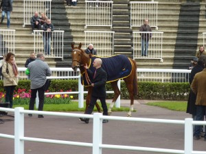 Winning Horse in Winner's Circle