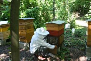 Tending the Hive